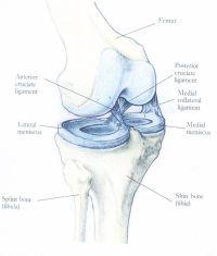 rehabilitace po tep kolene